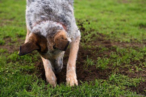 Dig Deeper - Understanding User Behavior on Your Website