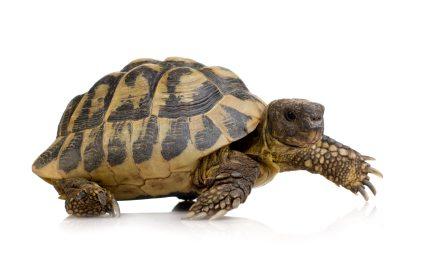 Is your website slow?